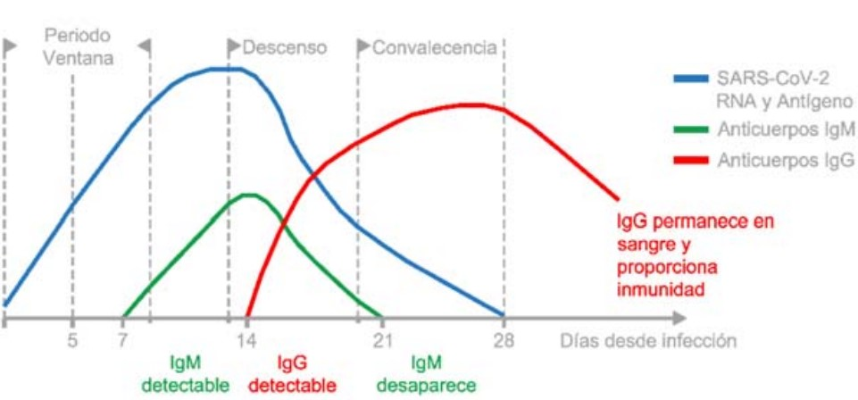 explicación IGM IGG para test serológico COVID-19